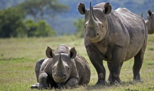 rhino-606862
